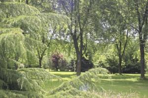 Levaltipis - photo de l'arboretum